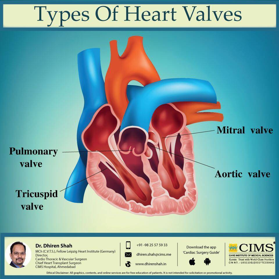 Types of heart valves.