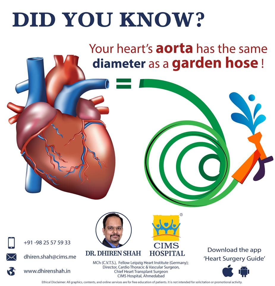 Did you know about this interesting heart fact?